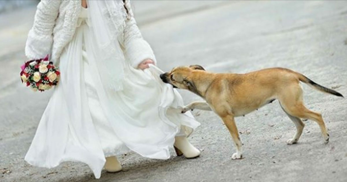 Dog Saves Wedding From Suicide Bomber