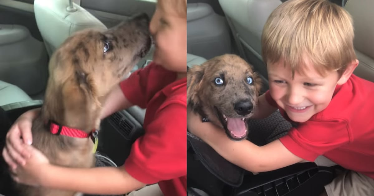 dad-surprises-boy-with-puppy-sons-reaction-is-priceless